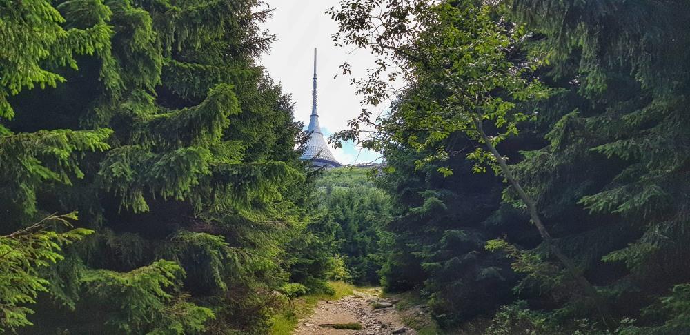 Ještěd cestou lesem
